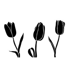 tulip silhouette in black color isolated on a vector image
