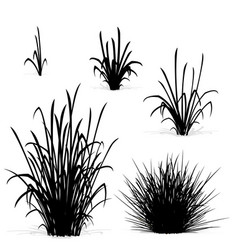 Various tufts grass elements black silhouettes vector
