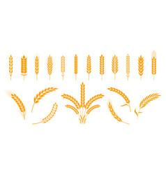 Wheat and rye ears barley rice grains vector