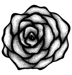 rose free-hand drawing in a graphic style points vector image