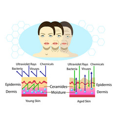 Effect of environment on the skin three types of vector
