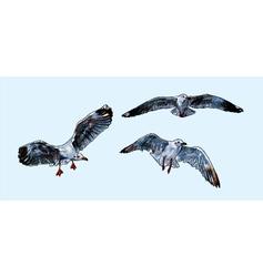 Flying Seagull vector