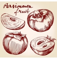 fruit persimmon set hand drawn vector image