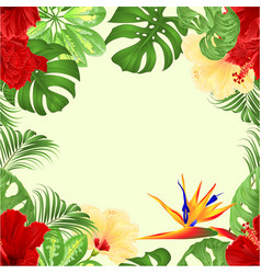 seamless border bouquet with tropical flowers vector image