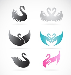 Set of swan design vector