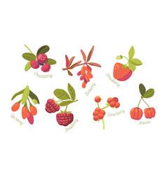 set seasonal summer garden and wild berries vector image