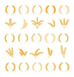 wheat and rye ears harvest barley grain growth vector image