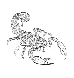 coloring scorpion for adults vector image