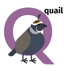 English animals zoo alphabet letter Q vector image vector image