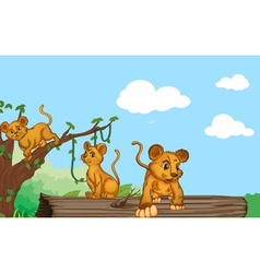 a group of cubs vector image