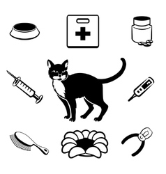 Cat veterinary clinic icons vector image