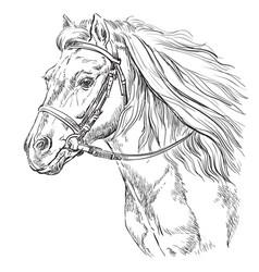 Horse portrait 21 vector
