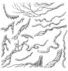 Liana branches sketch vector
