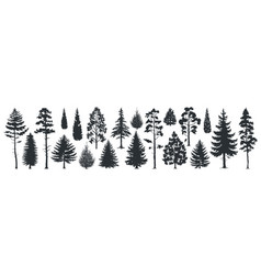 Pine tree silhouettes evergreen forest firs vector
