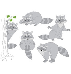 Raccoon Set vector image