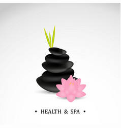 spa stones with lotus flower vector image