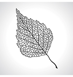 Black macro leaf of birch tree isolated vector image