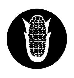 Corn fresh vegetable icon vector