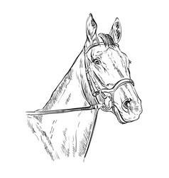 Horse portrait 22 vector