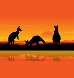 kangaroo on the lake scenery silhouettes vector image vector image
