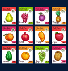 Price cards of sketch tropical exotic vector