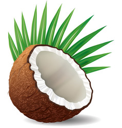 coconut with leaves isolated on white vector image