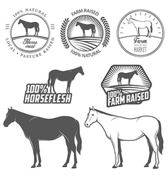 Set of horse meat labels and badges vector image vector image