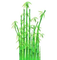 Bamboo sticks over white background vector