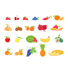 fruit and berries in cartoon style vector image