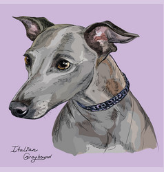 Italian greyhound colorful hand drawing portrait vector