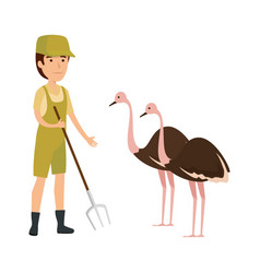 Man worker of zoo with ostrich vector