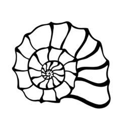 Black sea cockleshell vector