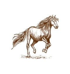 Running and prancing horse sketch portrait vector image