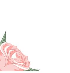 beautiful rose frame for dedication vector image
