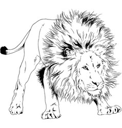 big lion with mane is painted with ink hand vector image