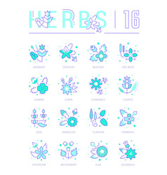 set blue line icons herbs vector image
