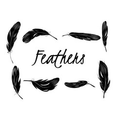 Set of isolated black feathers on transparent vector