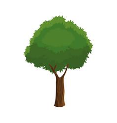 tree plant organic foliage over white background vector image