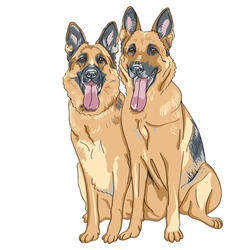 two dog German shepherd breed vector image
