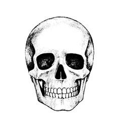 Human skull pencil hand drawing isolated vector