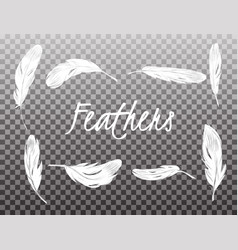 set of isolated white feathers on transparent vector image