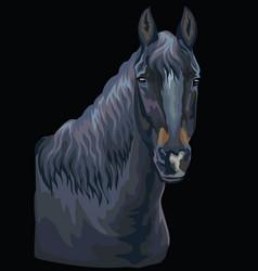 Colorful horse portrait-9 vector