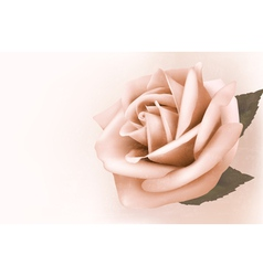 Vintage background with beautiful pink rose vector image