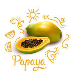 doodles around papaya composition vector image