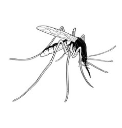 Mosquito bug fly wing sting contagion infection vector