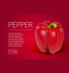red pepper isolated on transparent background vector image