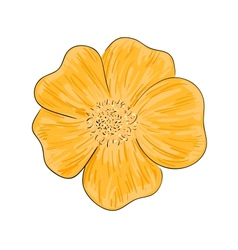 Colorful wild rose flower sketch vector image