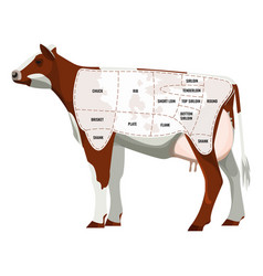Caw steak parts beef cattle parted into vector