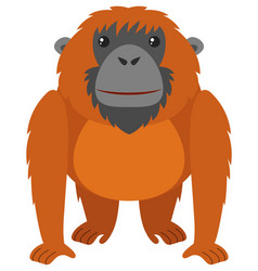 Orangutan with brown fur vector