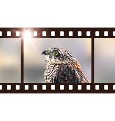 Photo film with hawk predatory bird vector